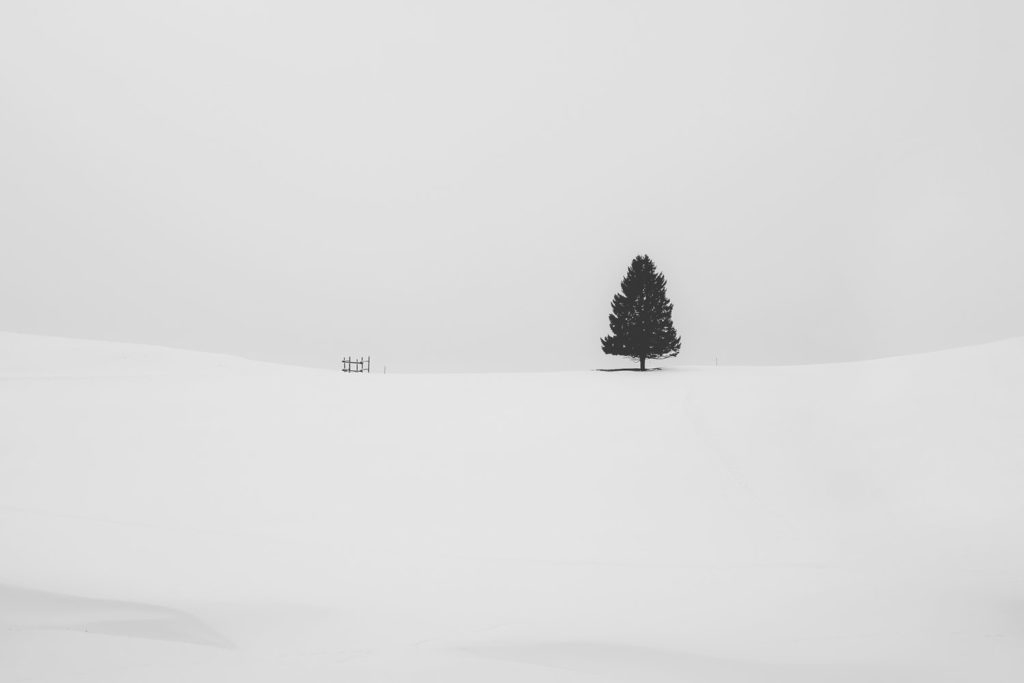 a tree stands alone far off in a snowy landscape