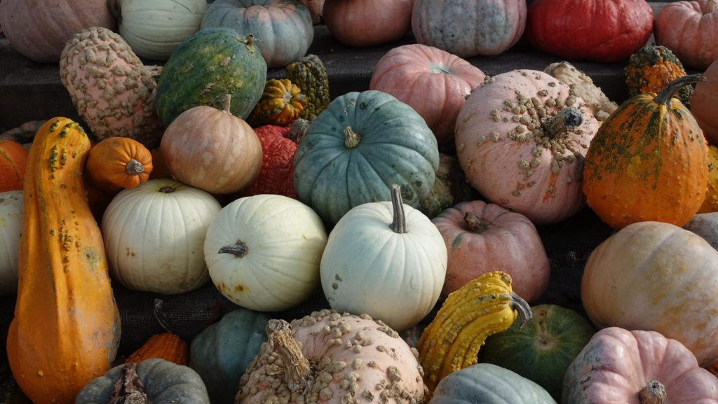 a pile of multicolored pumpkins in various shapes